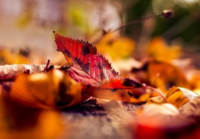 autumn-1801721_960_720 (2)