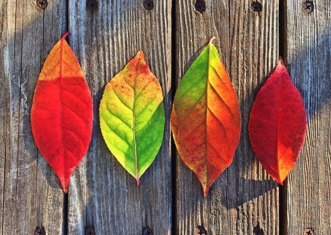 leaves-1051937_960_720