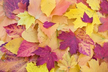 autumn-leaves-1789665_960_720